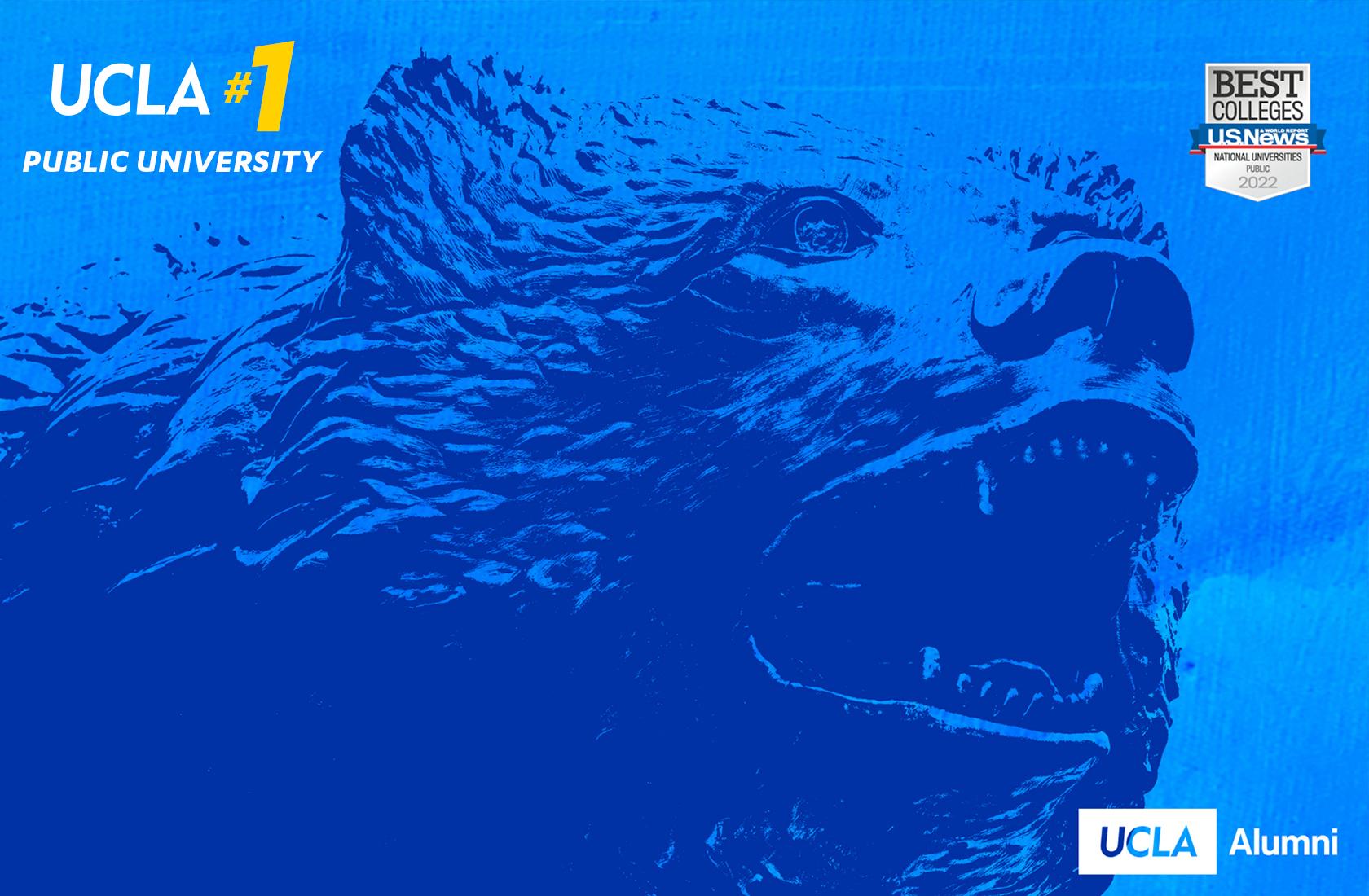 UCLA Blue Bruin Bear announcing that UCLA is the #1 Public University