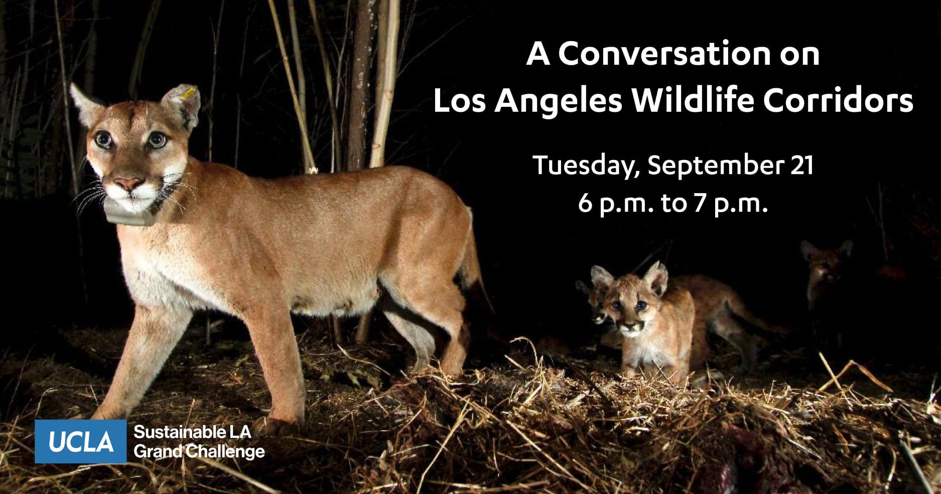 UCLA Sustainable LA Grand Challenge – A Conversation on Los Angeles Wildlife Corridors